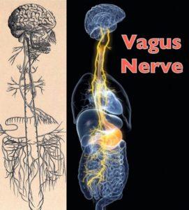 Vegetatív idegrendszer